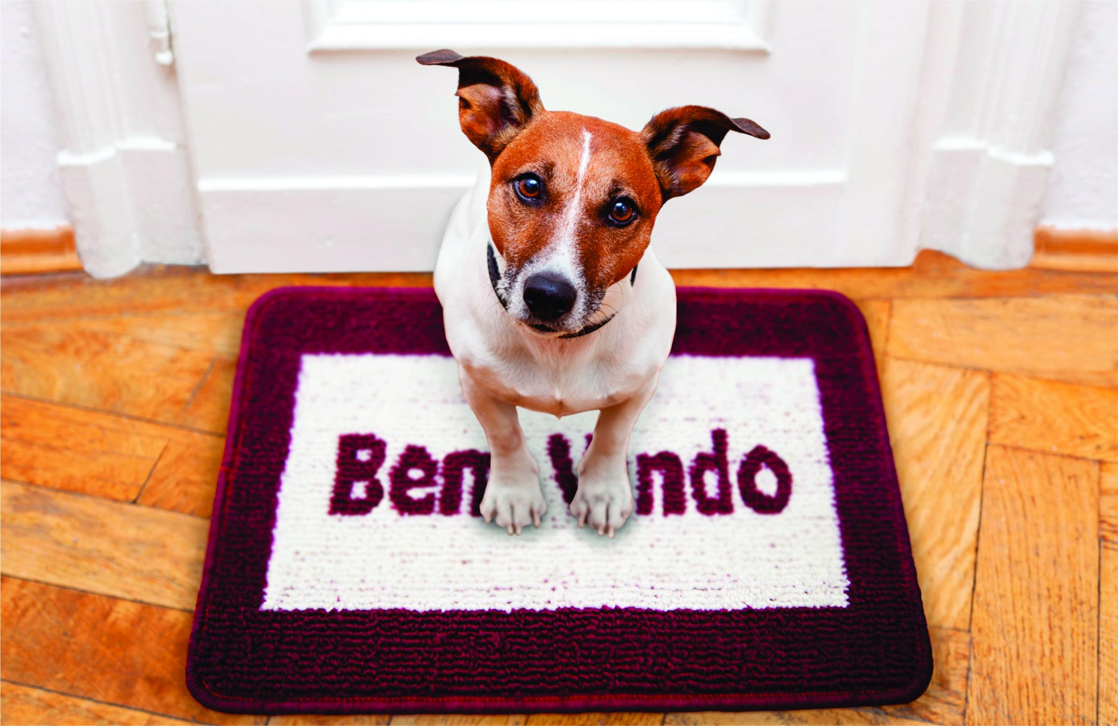 A imagem mostra um cãozinho com o corpo branco e o rosto marrom olhando para a câmera. Ele está sentado sob um tapete de entrada da Astra na cor bordô.