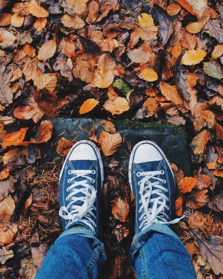 Na imagem folhas secas nas cores marrom, amarelo e laranja estão espalhadas pelo chão.